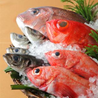 築地直送の鮮魚