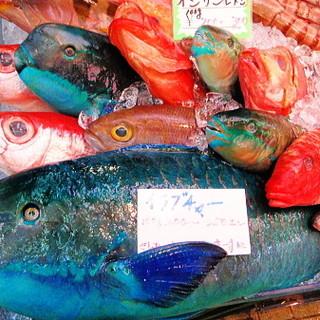 沖縄の近海魚毎日入荷!