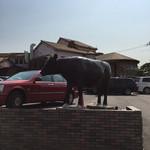 神戸屋 - 牛の置物、大きい!