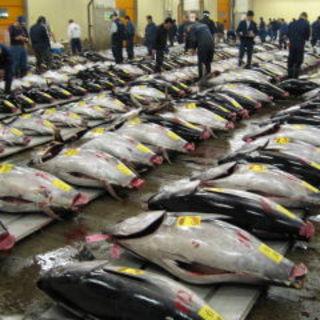 北部市場より毎朝届く鮮魚!!