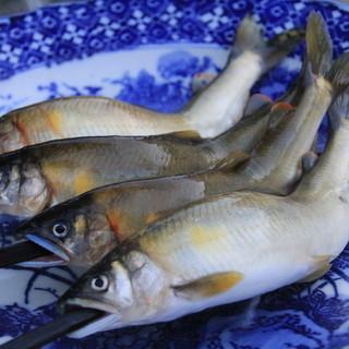 飛騨の季節天然食材を堪能できる隠れた名店!夏は天然鮎が美味い