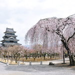 そば屋 五兵衛 - 4月6日の松本城