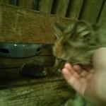 伝説の串 新時代 - たまたま外にいた猫