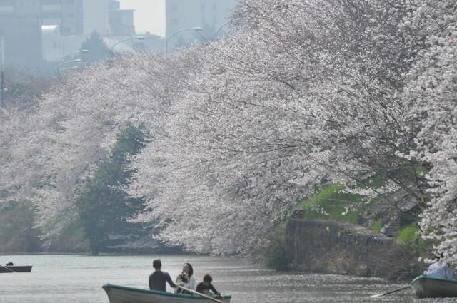 カナルカフェ - デッキカフェ、最奥の席から、船遊びを楽しむ人と桜。