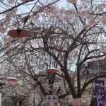 花見茶屋 音和 - 桜の下の店内