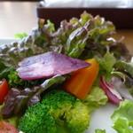 グルテンフリーCafé RiceTerrace かまくら - カレープレート(田んぼのパン付き)鎌倉野菜のサラダ
