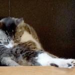 36335589 - 看板猫