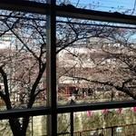 36362761 - 目黒川の桜
