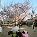 36398502 - お団子を持ってボキらがやってきたのは                       家から徒歩数分で行ける松崎公園。                       ほら~、もう桜が咲いてるよ。                                              ちびつぬ「きれいね~」