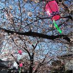 36398505 - 前にレビューした阿倍野路地裏の隠れ家的なカフェ                       『パルファン』もこの近くにあるんだよ。                       今日は通りすがりのご近所の人が桜を眺めたり、                       写真を撮られたりしていました。