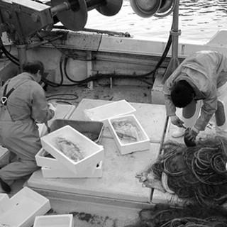 三浦半島の漁師さんから旬の魚を直接買い付けて店舗へ直送