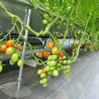 自社農園「ハイジの野菜畑」
