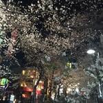 36460762 - お店の手前の坂は夜桜満開