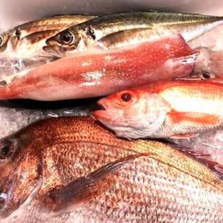 富山湾直送の新鮮なホンモノ天然魚介をご用意いたします。