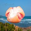 アリエッタ - 料理写真:苺大福風パン(紅)