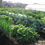 みやもとファーム - 農業を始めてみたい方、募集中です! みやもとファーム農業体験塾