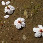アジトイズム - 果敢なき春