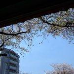ブギーカフェ - 桜
