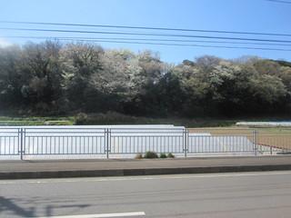 ブレッドファーム - お店の前の山桜が満開でした