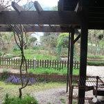 3670312 - 庭はハーブ園になってます。