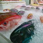 36712904 - すごいカラフルな南国のお魚!