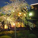 Kochuuan - 桜
