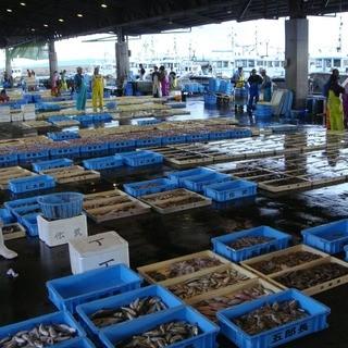 お造り豊浜、片名漁港より直接買い付け