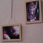 36880437 - 猫写真いっぱい 店内