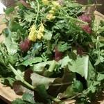 スマイルファームキッチン - グリーンサラダM 限定パクチーバージョン