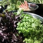 ナチュラル サプリ - 2月後半から~4月初旬にかけて元気なお野菜。からし菜、わさび菜