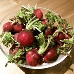 ナチュラル サプリ - 鮮やかな赤いお野菜、ラディッシュ