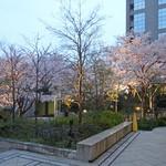 ケンゾーエステイトワイナリー - 春の宵〜窓の外は桜が満開