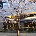 ケンゾーエステイトワイナリー - ローダーデール前の桜