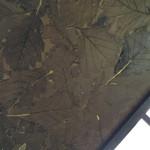 龍朋 - 一見、ただの薄汚れた壁。よく見ると、なんと!一面に柏(たぶん)の葉っぱが貼りつめられている。