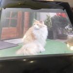 37197614 - 看板猫は、アルバムの中でいつまでも愛らしく