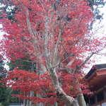 花菱 - 紅葉