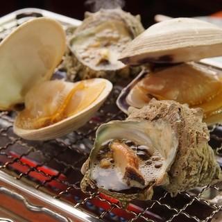 宮城県でも見られないめずらしい貝と出会えることもあります