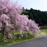 37273279 - 近くには見事な枝垂れ桜も