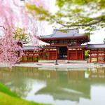 37339934 - 世界遺産 国宝 平等院と桜('15.04)