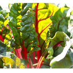 OTODAMA BAR - 地物の野菜を取り揃えてます