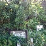 木の実 -