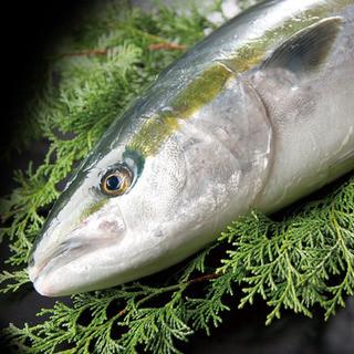 毎日新鮮な魚が築地より入荷します!
