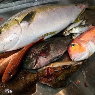 旬の天然魚介