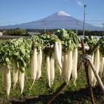 BISTRO THE FARM - 富士山麓のお野菜を中心