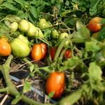BISTRO THE FARM -