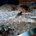 函館あかちょうちん - 料理写真:カウンターから活きのいい魚がみえます!