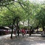 まことや - 蓮馨寺の境内は木陰も多くて食べる所には困りません