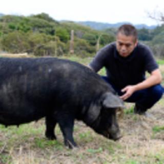 元気な豚を自分で育てる