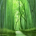 茶寮 八翠 - 嵯峨の竹林からも程近い立地。嵐山観光の際に是非お立ち寄りください。