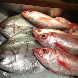 【新鮮魚介】全国の港や築地直送の鮮魚を味わう